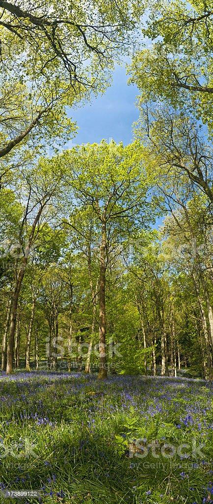 Idyllic summer forest verdant vertical banner royalty-free stock photo