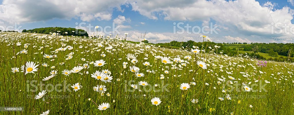 Idyllic summer meadow panorama royalty-free stock photo
