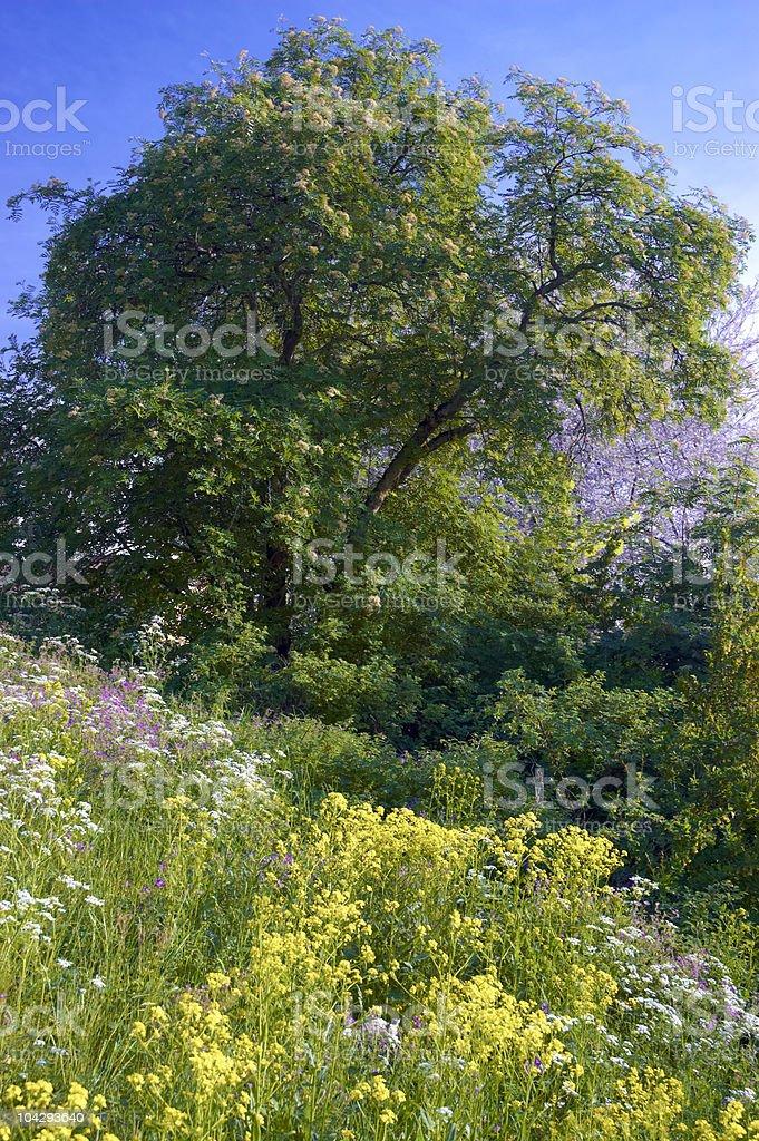 Idyllic summer meadow royalty-free stock photo