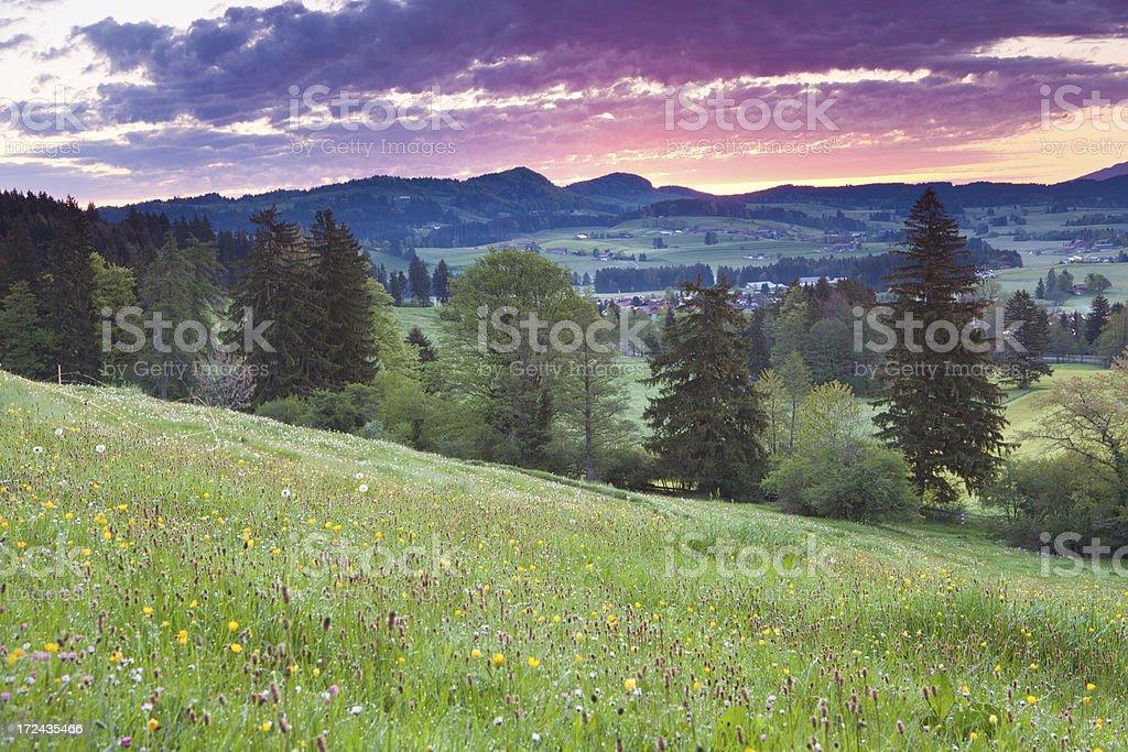 idyllic sunrise on blooming meadows, bavarian ostallgäu, bavaria, germany stock photo