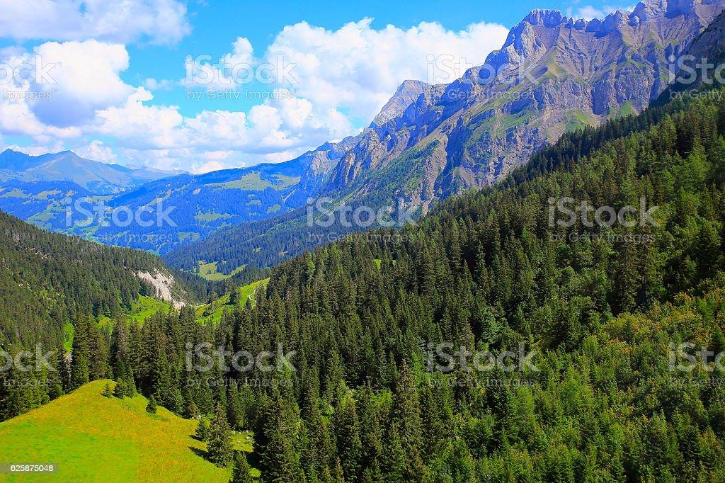 Idyllic swiss alpine trails, Engadine pine tree woodland: Swiss Alps stock photo