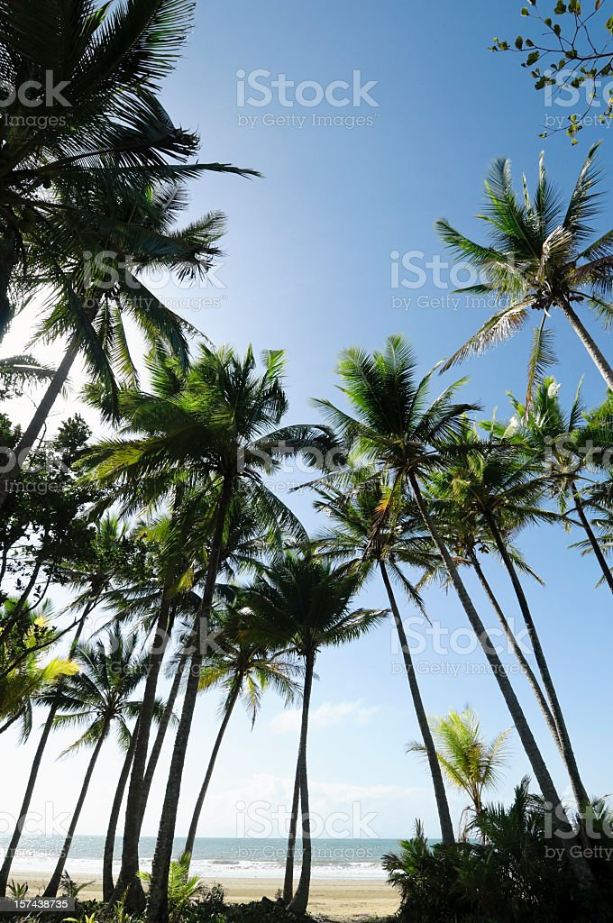 Idyllic Tropical Beach royalty-free stock photo
