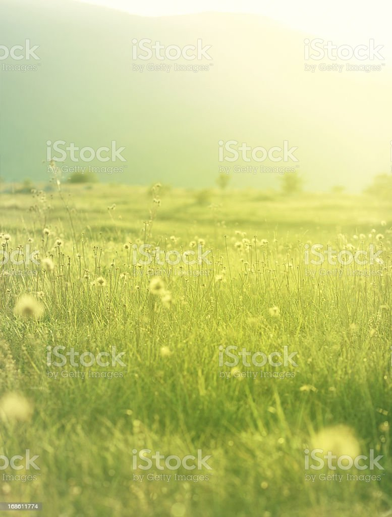 Idyllic vibrant summer meadow royalty-free stock photo
