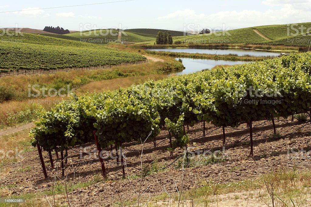 Idyllic vineyards with a windy river stock photo