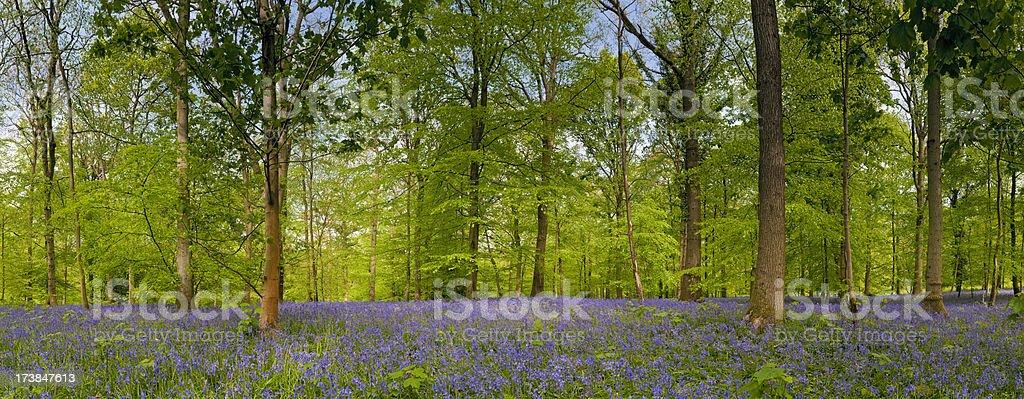 Idyllic wilderness leafy green forest royalty-free stock photo