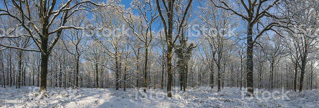 Idyllic winter woodland white snowy forest panorama royalty-free stock photo