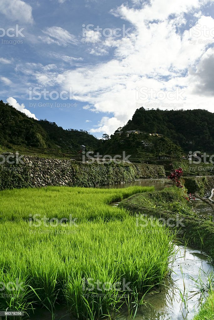 ifugao rice terraces banaue royalty-free stock photo