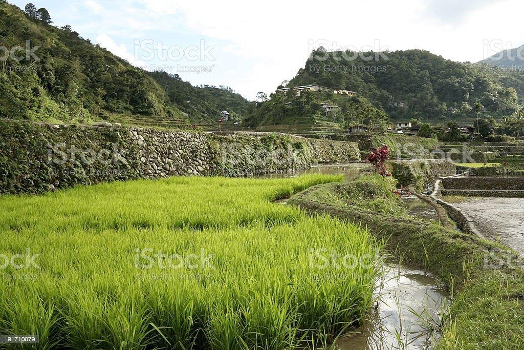 ifugao rice terraces batad philippines royalty-free stock photo