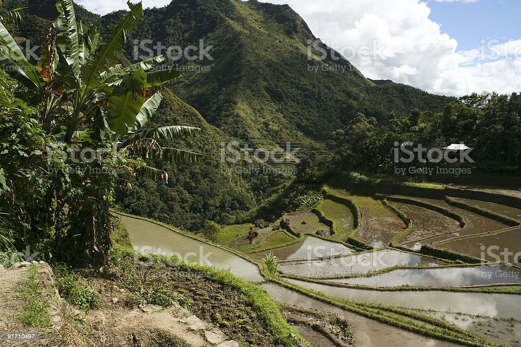 ifugao rice terraces batad royalty-free stock photo