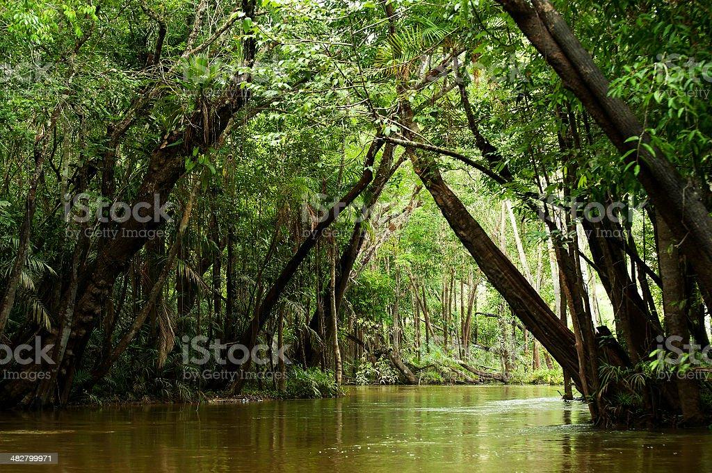 Igarapé in the Brazilian Amazon royalty-free stock photo