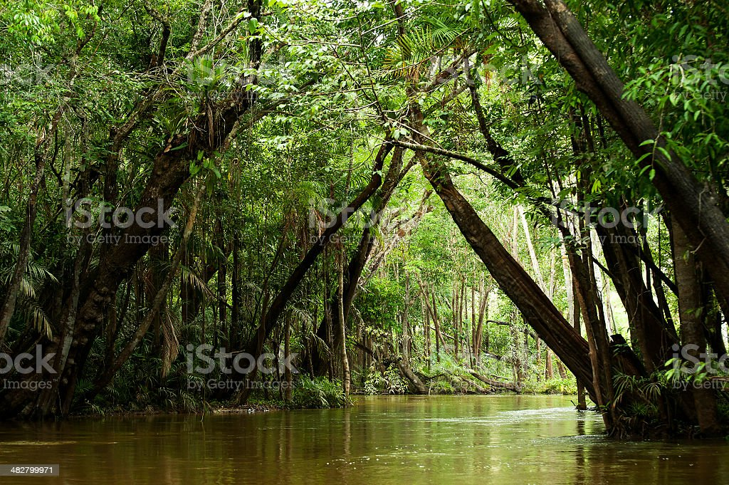 Igarapé in the Brazilian Amazon stock photo