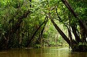 Igarapé in the Brazilian Amazon