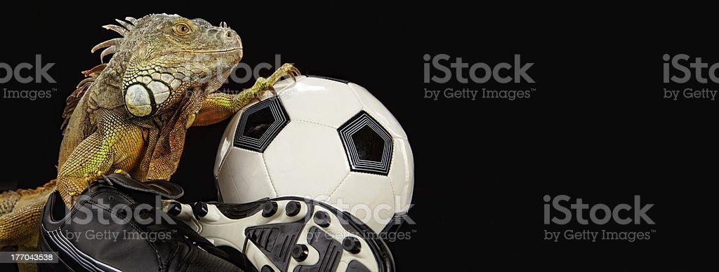 Iguana in football concept royalty-free stock photo