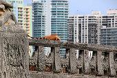 Iguana in the City