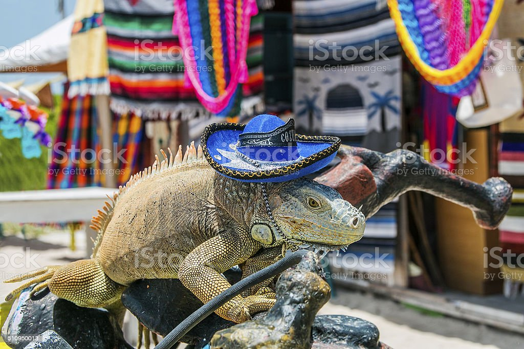 Iguana with a Mexican hat stock photo