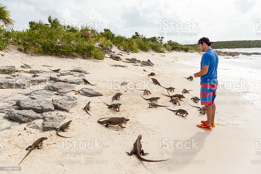 Iguanas on the beach - Bahamas stock photo