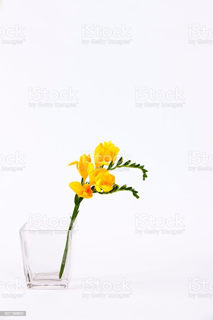 Ikebana, Freesia stock photo