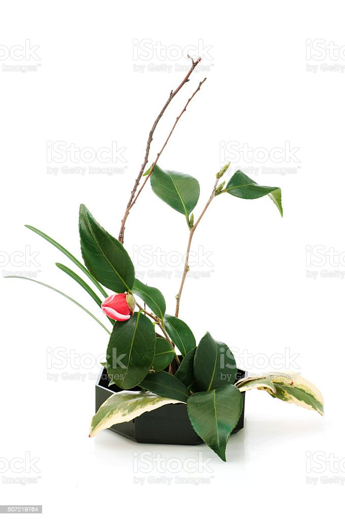 ikebana with camellia flower stock photo