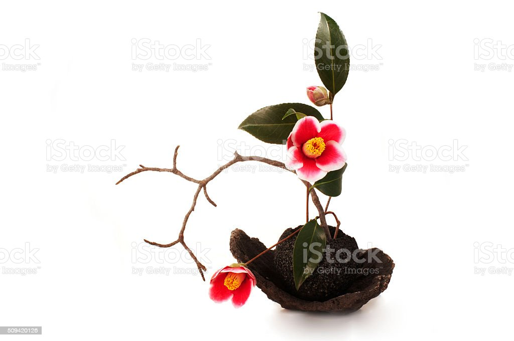 ikebana with camellia flowers on a white background stock photo