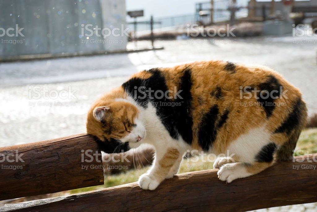 il gatto coccolone stock photo