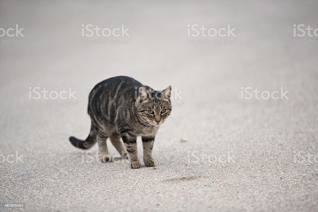 Il gatto randagio stock photo