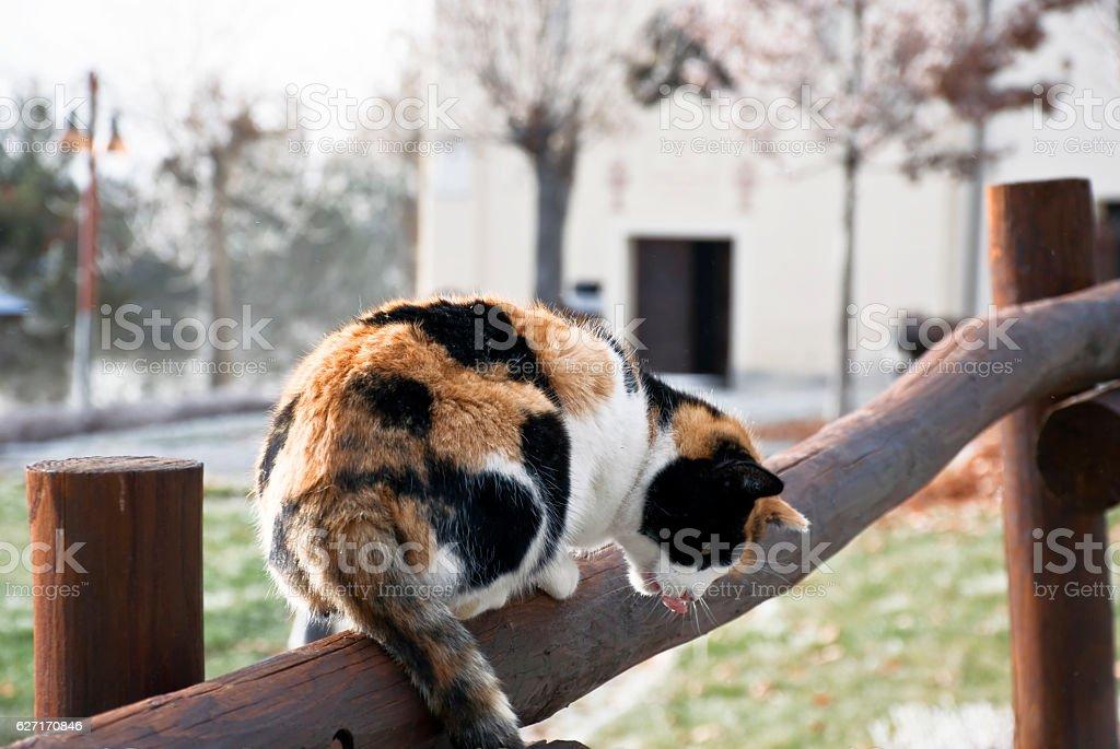 il gatto sulla staccionata stock photo