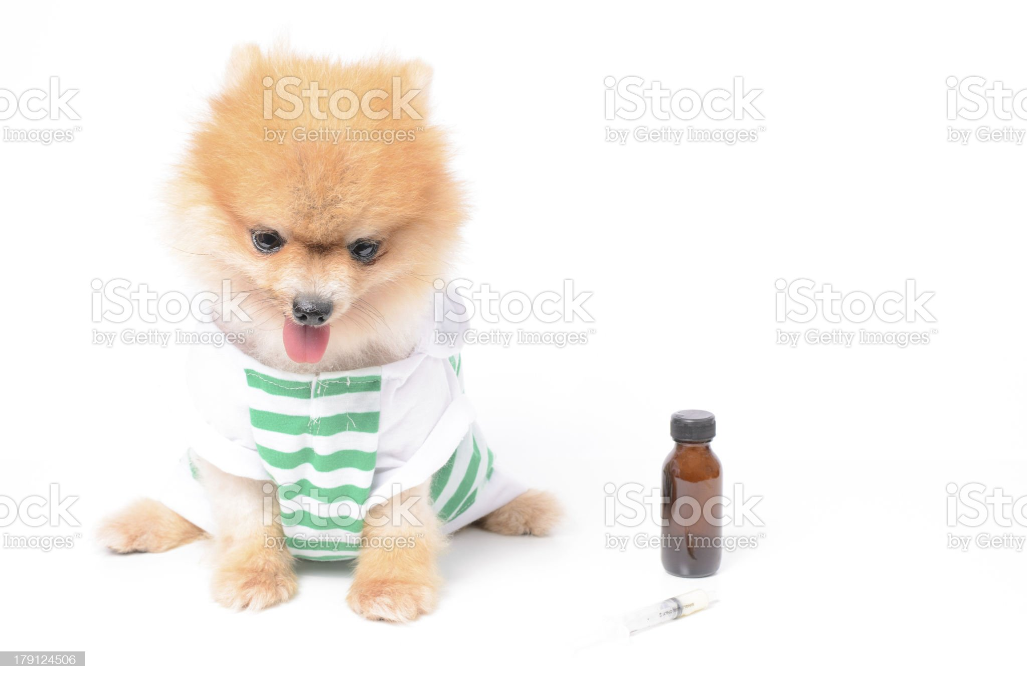 ill dog and drug royalty-free stock photo