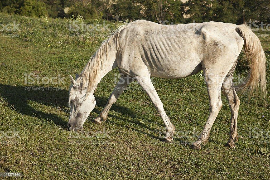 Ill horse stock photo