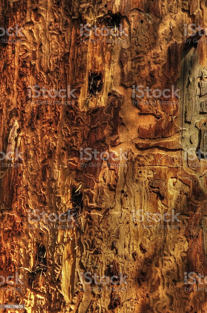 ill tree close-up royalty-free stock photo