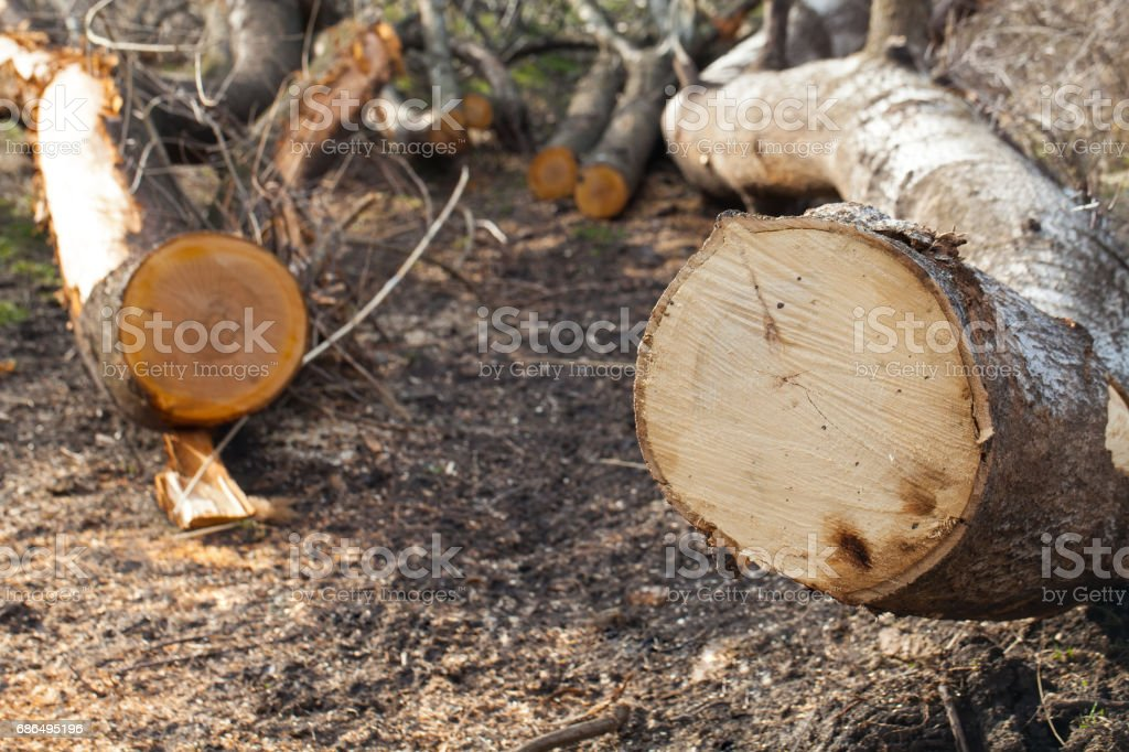 Illegal deforestation close up stock photo