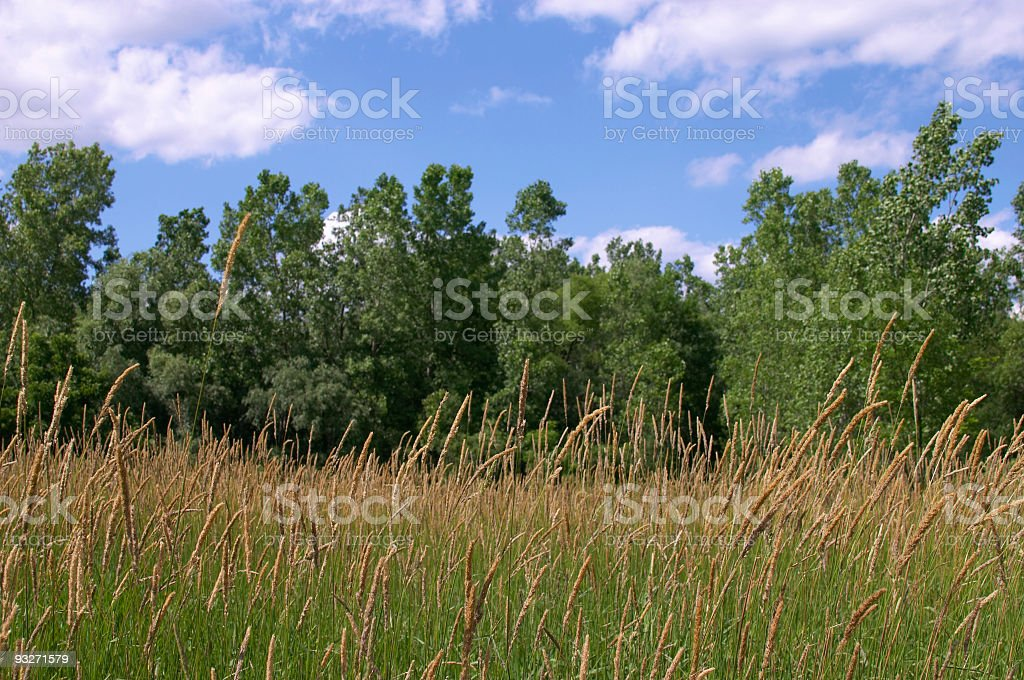 Illinois Tall Grass royalty-free stock photo