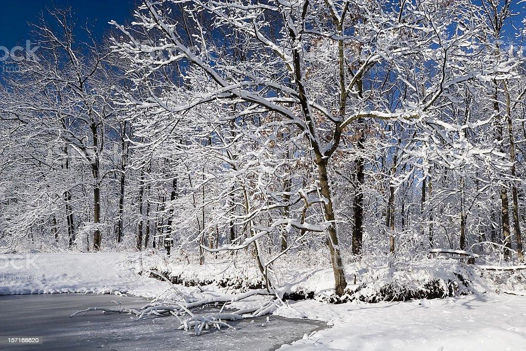 Illinois Winter Wonderland royalty-free stock photo