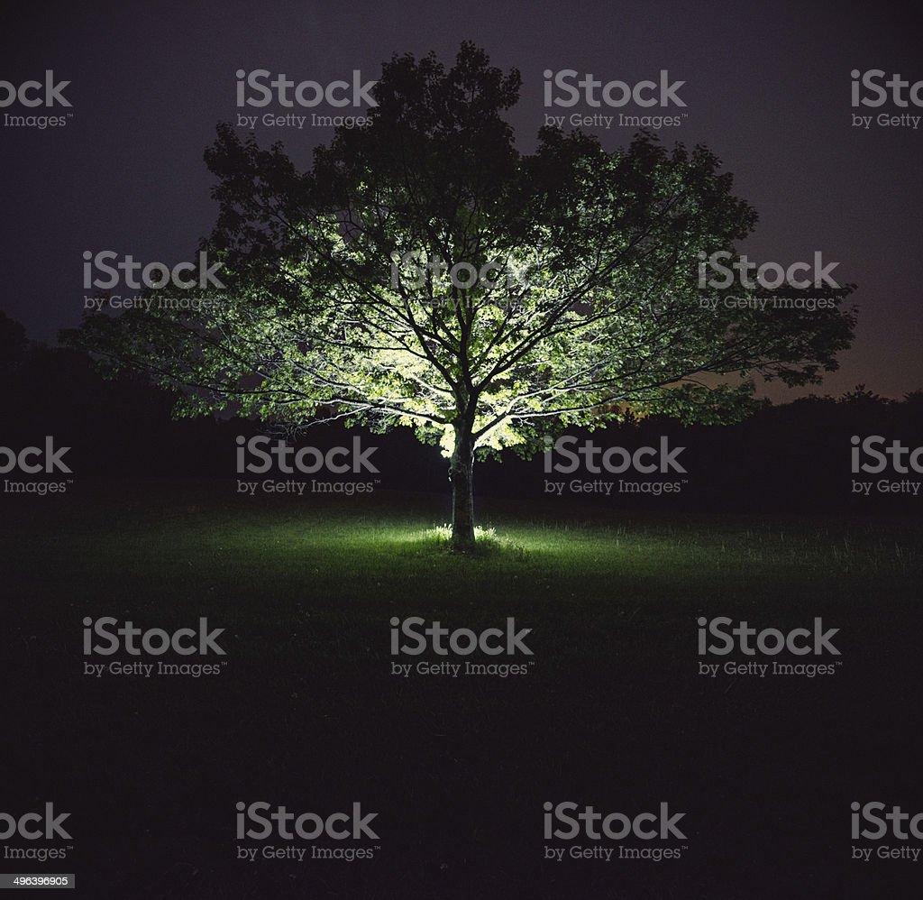 Illuminated Branches royalty-free stock photo