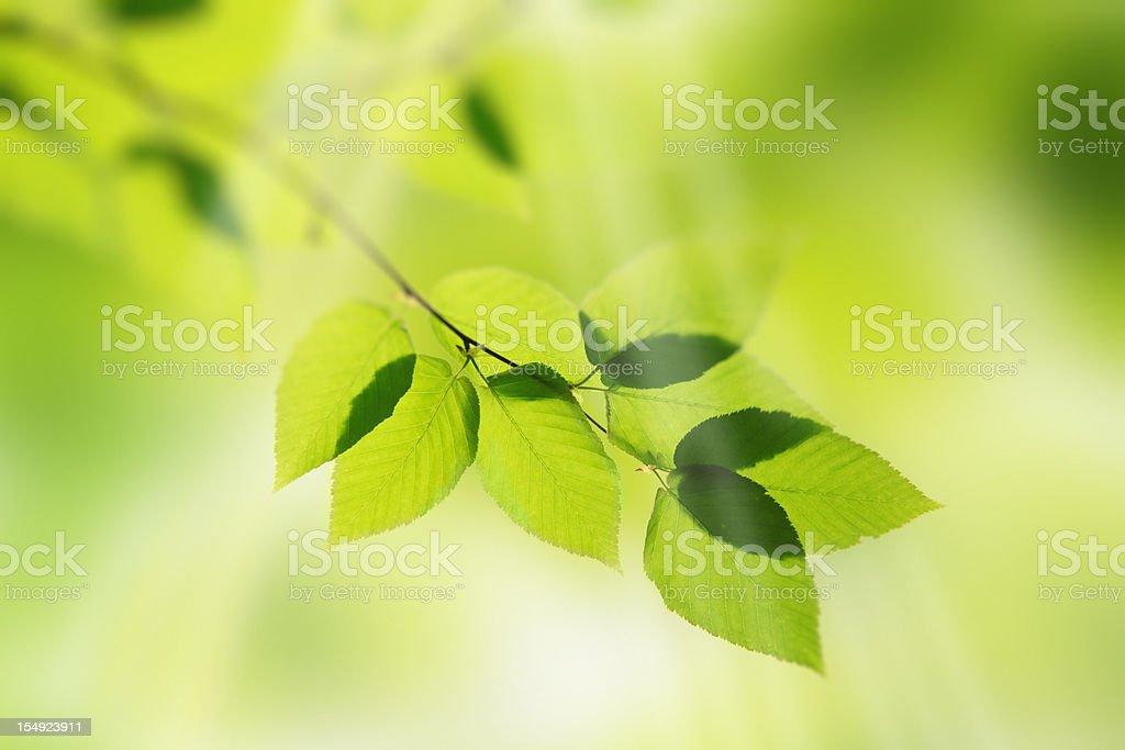 Illuminated green leaves royalty-free stock photo