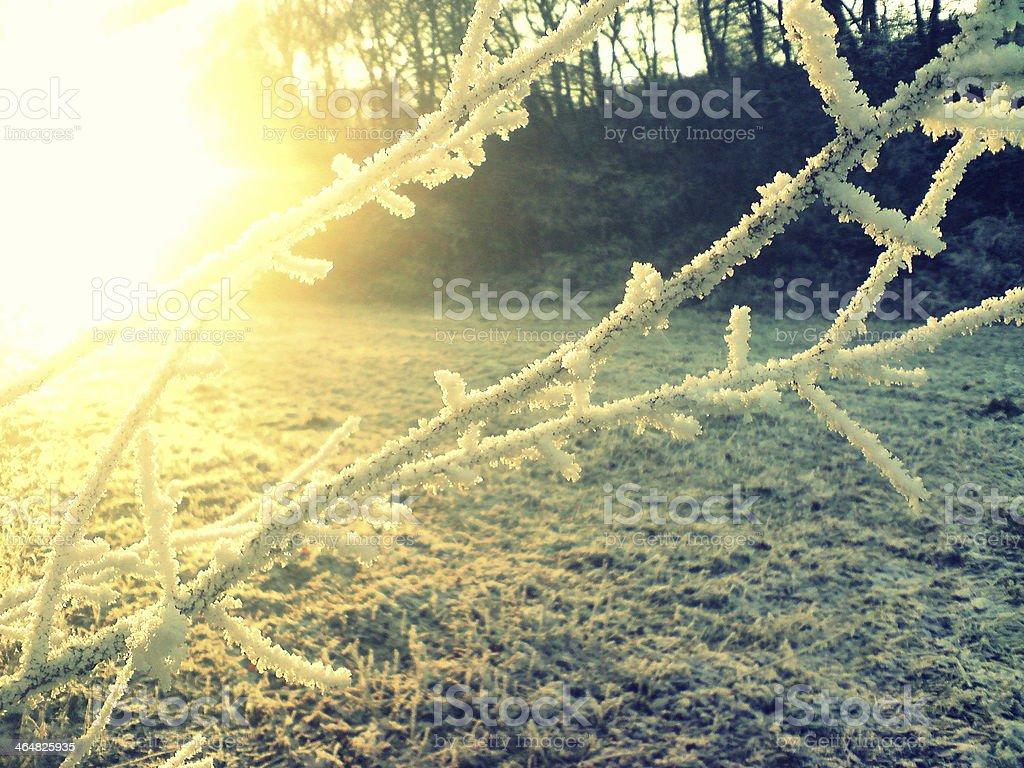 Iluminado cristais de gelo foto de stock royalty-free