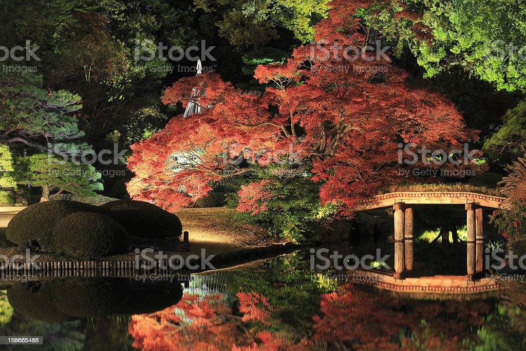 illuminated Japanese garden stock photo