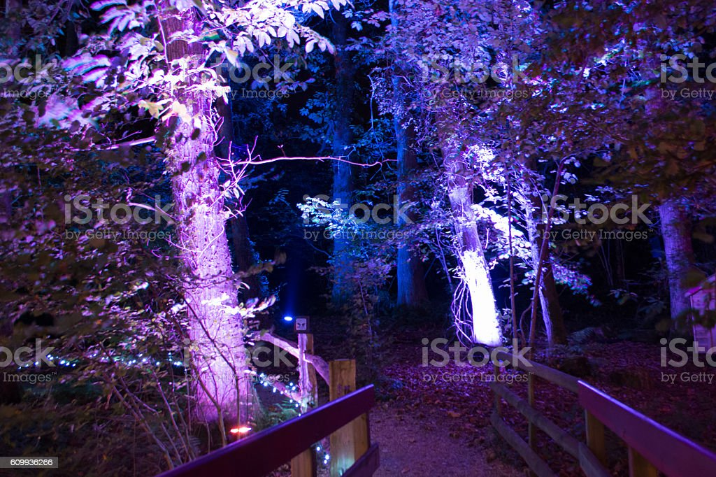 Illuminated Path Through the Forest stock photo