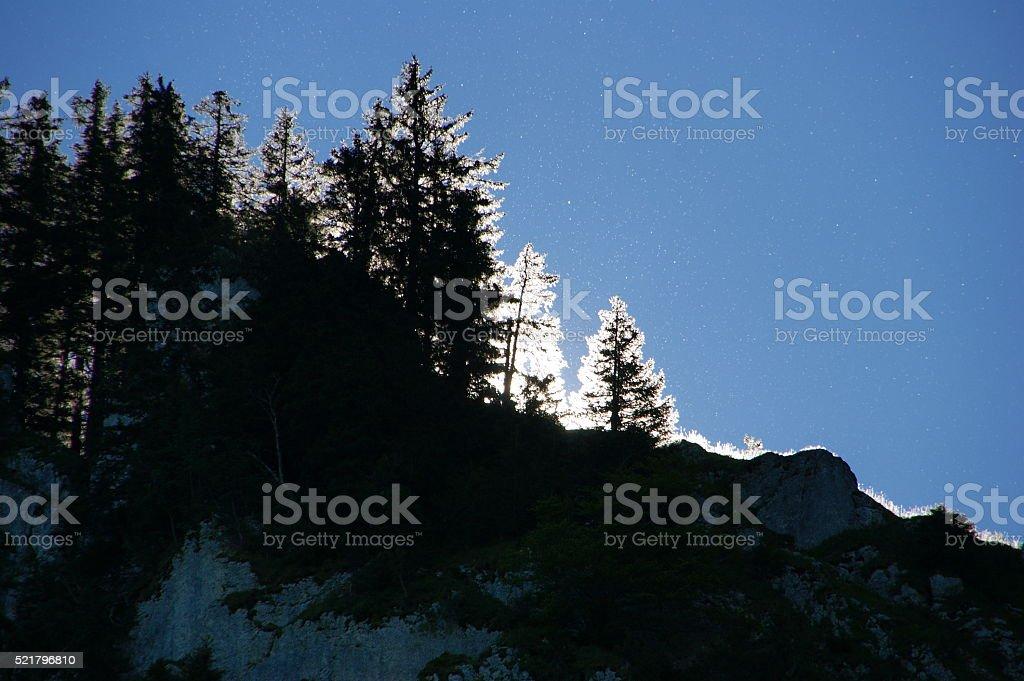 Illuminated trees stock photo