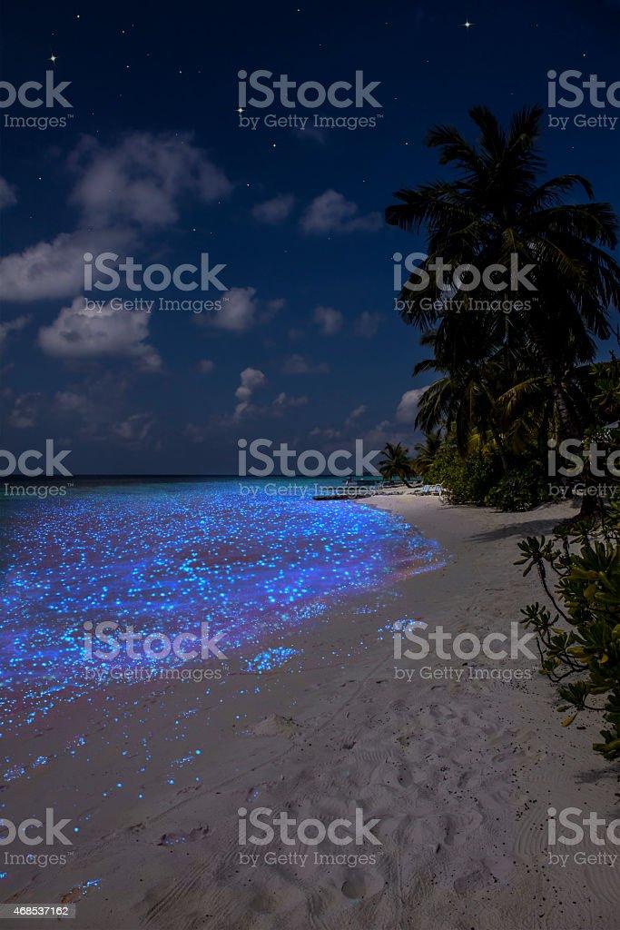 Illumination of plankton at the Maldives stock photo