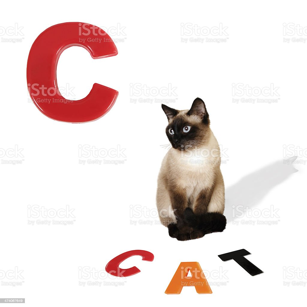 Illustrated alphabet letter C and cat. stock photo