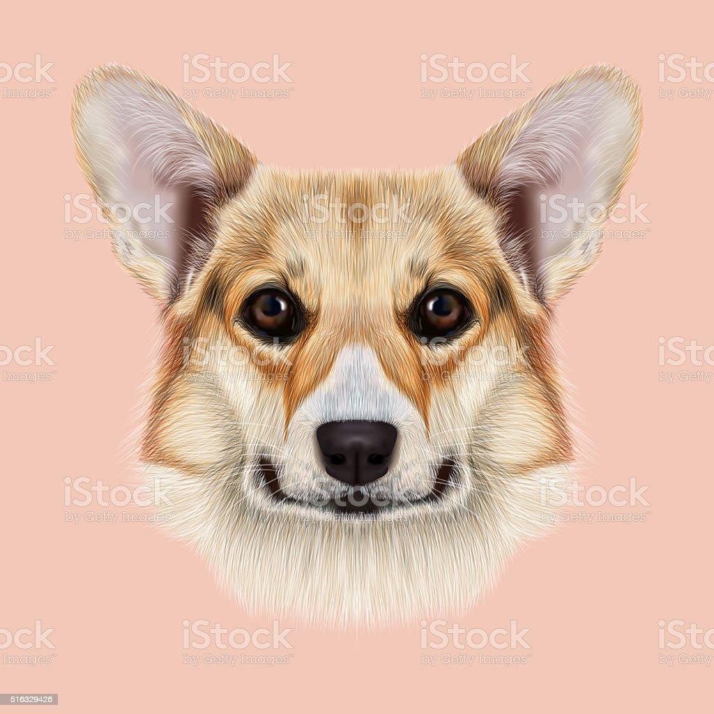 Illustrated portrait Pembroke Welsh Corgi Dog. stock photo