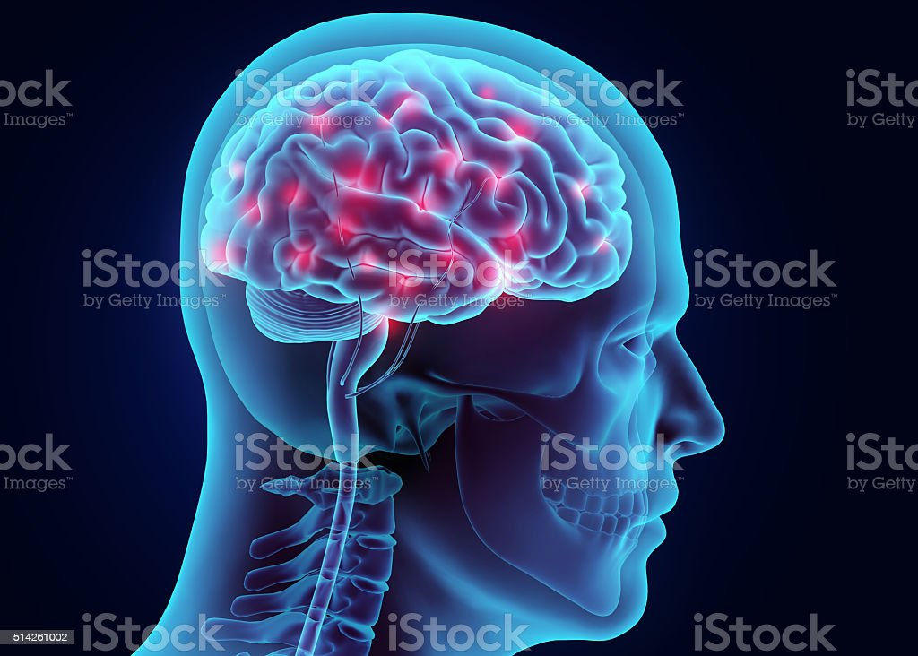 3D illustration brain nervous system active. stock photo