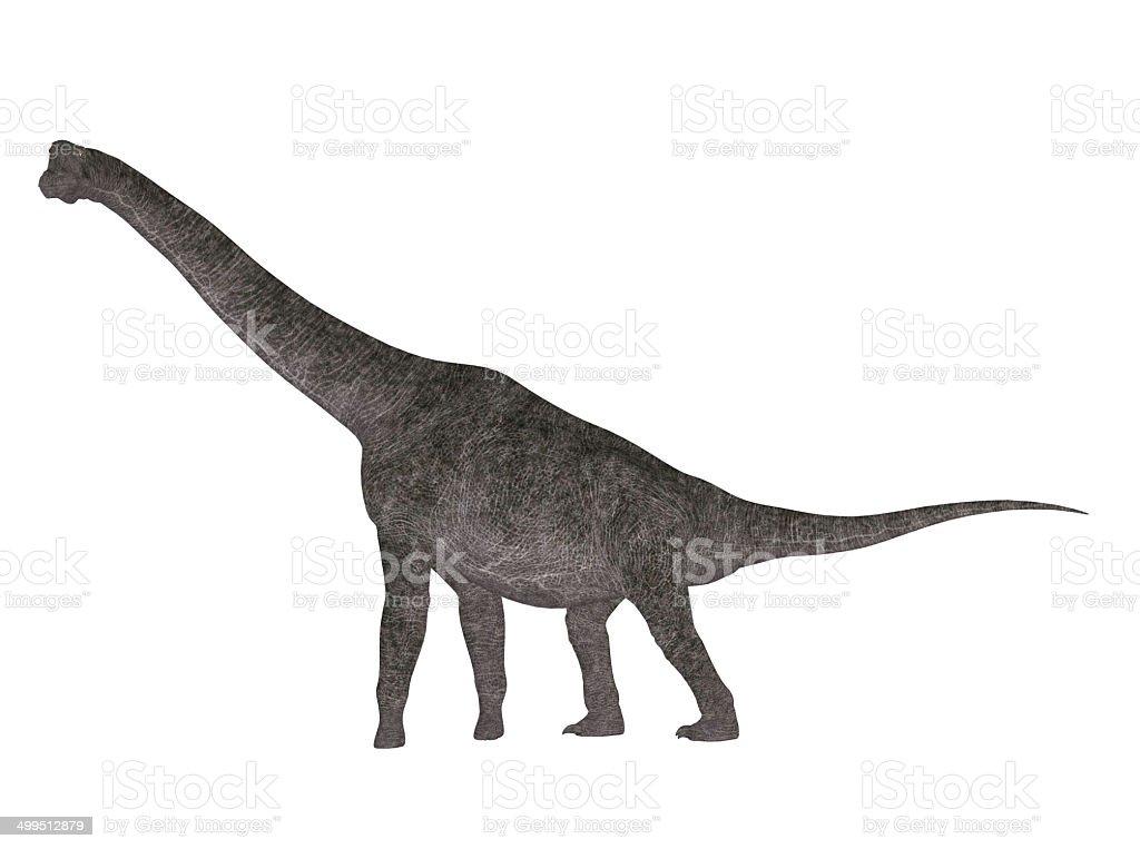 Illustration of a Brachiosaurus stock photo