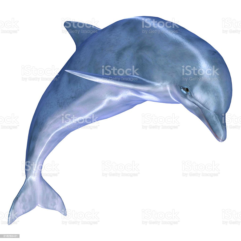 Illustration of a common dolphin stock photo