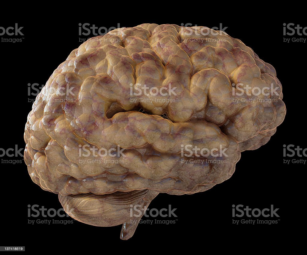 Illustration of a fresh moist brain. stock photo