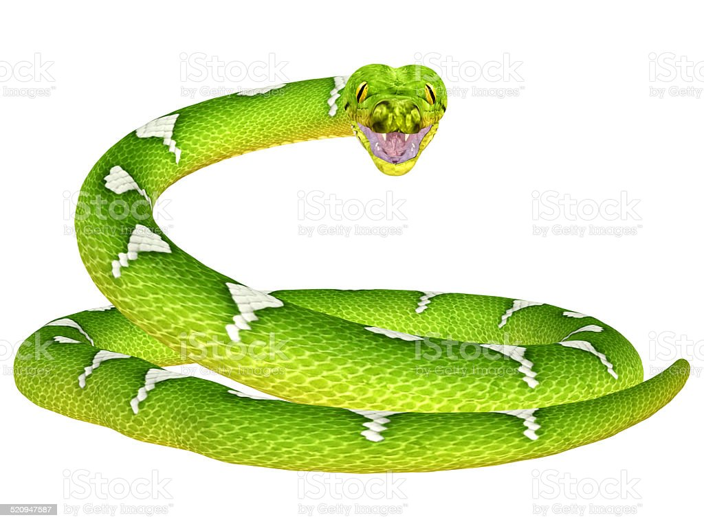 Illustration of a green tree python snake stock photo