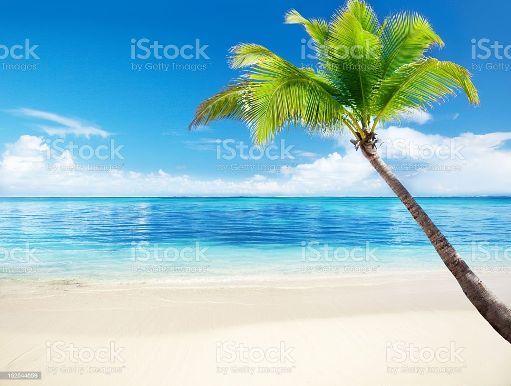 Illustration of a palm tree on a beach by bright blue ocean royalty-free stock photo