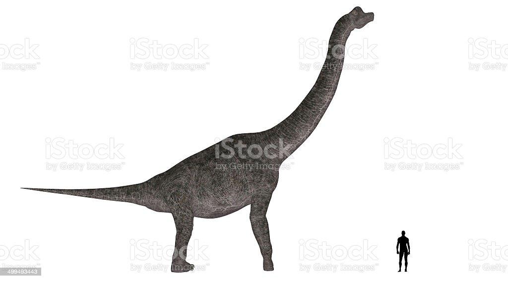 Illustration of an Brachiosaurus vs Human size comparison stock photo