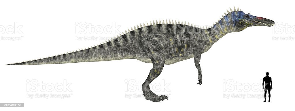 Illustration of an Suchomimus vs Human size comparison vector art illustration