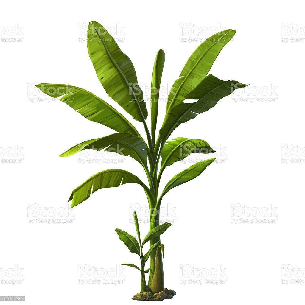 illustration of banana tree stock photo